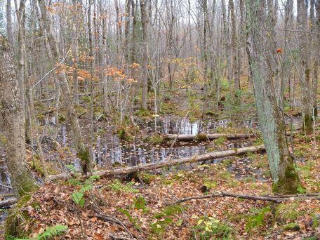 Tyler Forks Forest