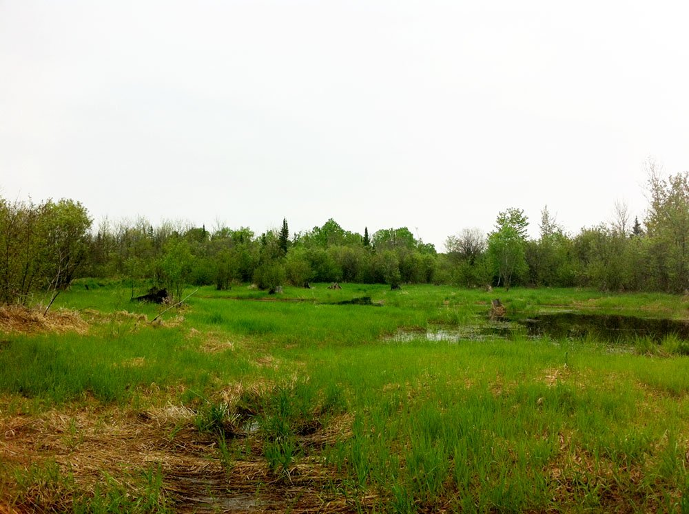 North Pike's Creek Wetlands Community Forest