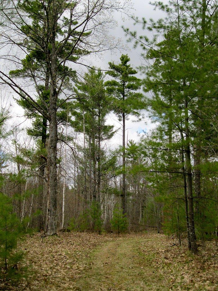 Telemark Forest
