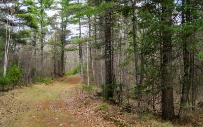 Telemark Forest Conservation Opportunity