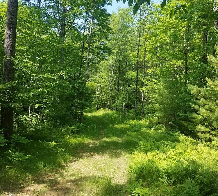 Landmark Conservancy to Purchase Western Portion of Mt. Telemark Property