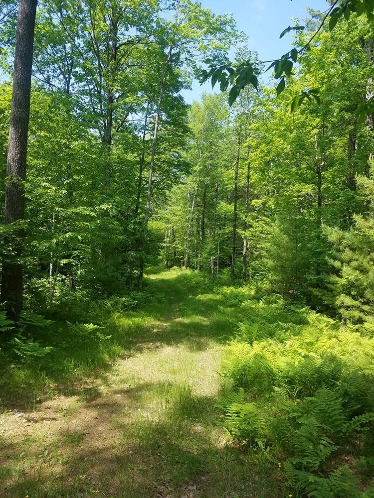 Once purchased, the Telemark Preserve will be open to the public for backcountry recreation.
