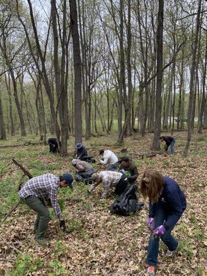 Spiderwort Seed Collection Workday Photo