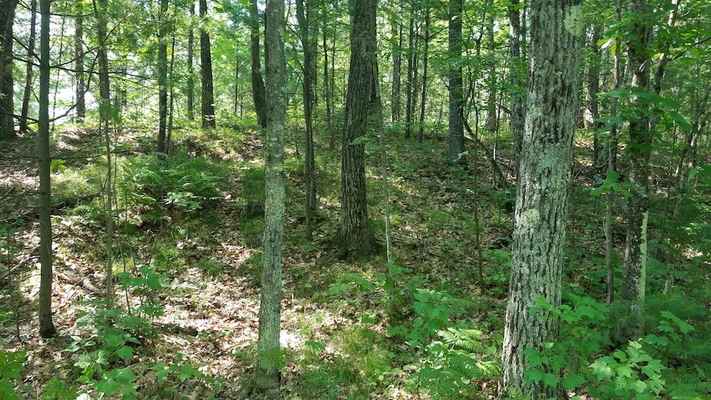 Landmark Conservancy to Protect 218 Acres of Telemark Forest